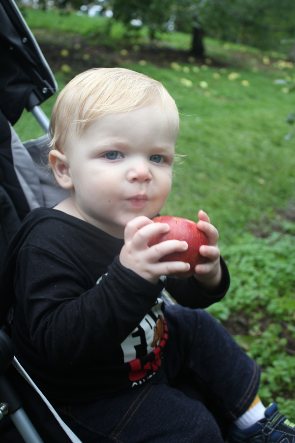 apple-picking-12