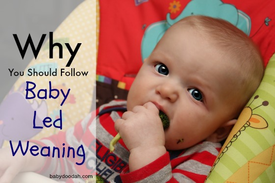 Why You Should Follow Baby Led Weaning - Baby Doodah